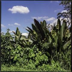 Selva la Candona, Mexico